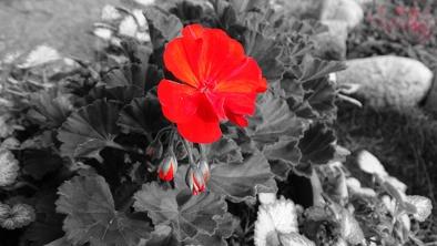 Kwiatek inaczej