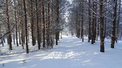 Zimowe krajobrazy